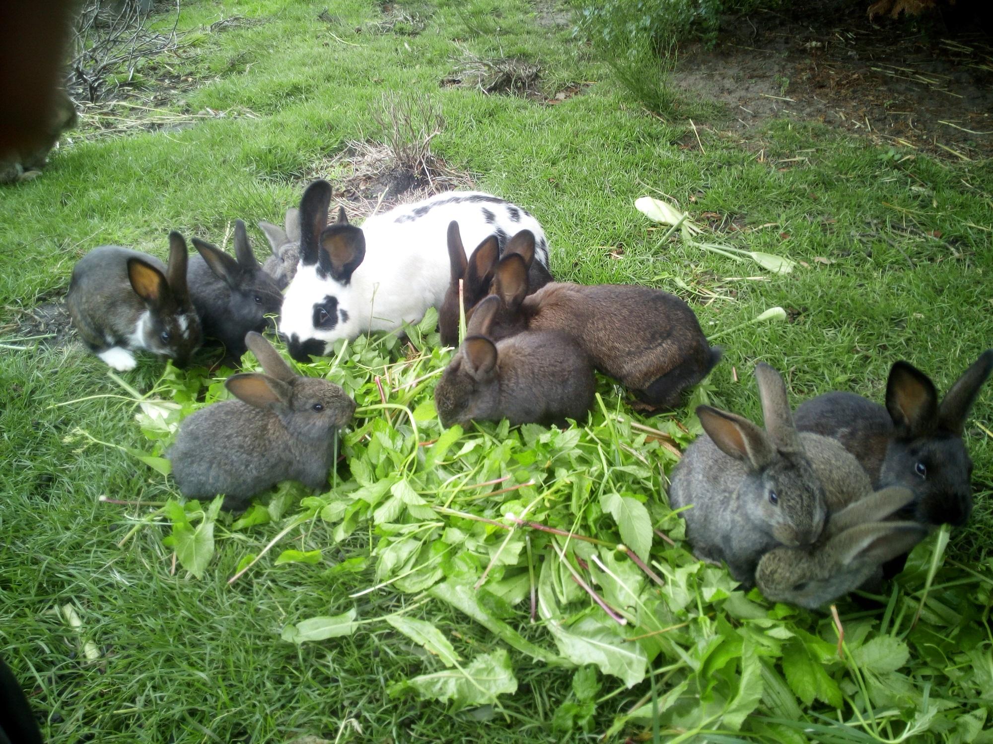 Unsere Tiere:  die Kaninchen vom Mitmachgartenbau