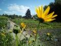 Mitmachgartenbau